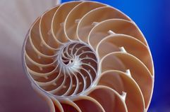 Escudo do nautilus Fotos de Stock
