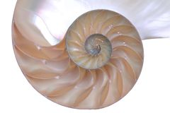 Escudo do nautilus Fotos de Stock Royalty Free
