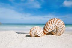 Escudo do nautilus com oceano, praia e seascape Foto de Stock