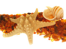Escudo dos Starfish & do mar fotografia de stock