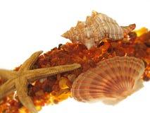 Escudo dos Starfish & do mar fotos de stock royalty free