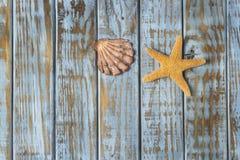 Escudo e starfish imagens de stock royalty free