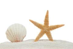 Escudo e starfish do mar na areia isolada Foto de Stock Royalty Free