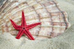 Escudo e starfish na areia da praia Fotografia de Stock Royalty Free