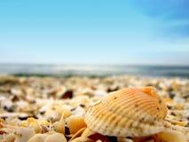 Escudo em uma praia fotografia de stock royalty free