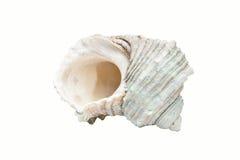 Escudo espiral branco Imagem de Stock Royalty Free
