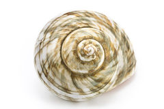 Escudo espiral do mar Imagem de Stock Royalty Free