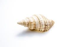 Escudo marinho do mar Foto de Stock