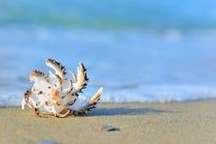 Escudo na areia Fotografia de Stock Royalty Free