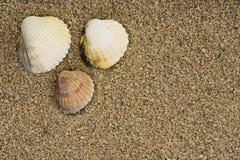 Escudo na areia Imagem de Stock