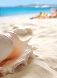 Escudo na praia Foto de Stock