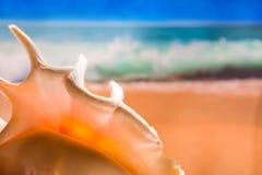 Escudo na praia fotos de stock royalty free