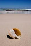 Escudo na praia Imagem de Stock