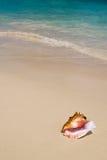 Escudo na praia branca foto de stock