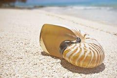 Escudo na praia tropical foto de stock
