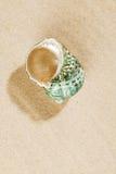 Escudo pearly verde na areia do mar Imagem de Stock Royalty Free