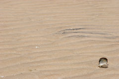 Escudo que coloca em uma praia desserted Fotografia de Stock