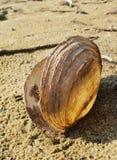 escudo translúcido que encontra-se na areia amarela molhada clara fotografia de stock royalty free