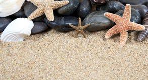Escudos agradáveis do mar na praia arenosa fotos de stock royalty free