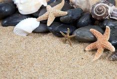 Escudos agradáveis do mar na praia arenosa imagem de stock