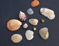 Escudos Assorted do mar Fotografia de Stock Royalty Free