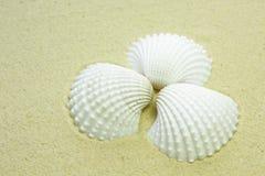 Escudos brancos em uma praia arenosa Fotos de Stock Royalty Free