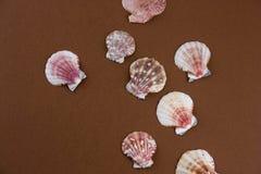 Escudos colocados lisos do mar em um fundo marrom fotos de stock royalty free