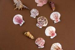 Escudos colocados lisos do mar em um fundo marrom foto de stock royalty free