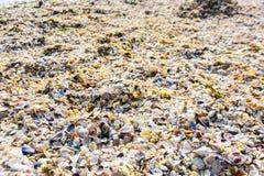 Escudos coloridos do mar como o fundo imagens de stock