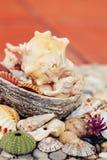 Escudos coloridos do mar no fundo da cor, em férias e no conceito corais de vida dos feriados imagens de stock