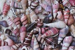 Escudos coloridos minúsculos na praia fotos de stock royalty free