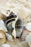 Escudos coloridos na praia fotografia de stock