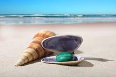 Escudos com a pedra na praia Fotografia de Stock Royalty Free
