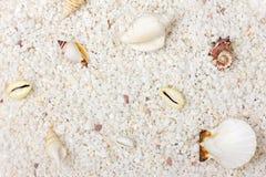Escudos da areia e do mar Imagem de Stock Royalty Free