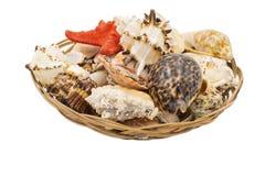 Escudos da estrela do mar e do mar em uma cesta de vime imagens de stock