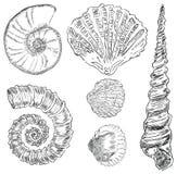 Escudos da fauna marinha Fotos de Stock