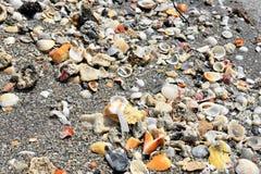 Escudos da praia Fotografia de Stock