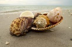 Escudos da praia fotografia de stock royalty free