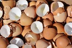 Escudos de ovo Fotografia de Stock
