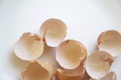 Escudos de ovo delicados em um branco e em um Airy Background imagens de stock