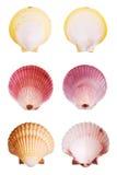 Escudos de Scallop foto de stock