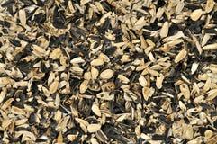 Escudos de sementes de girassol Imagem de Stock