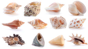 Escudos diferentes do mar (2) fotografia de stock