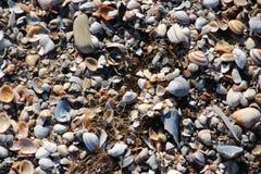 Escudos do berbigão na praia no sol imagem de stock