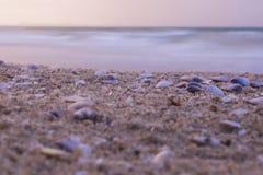 Escudos do close-up na praia no por do sol, fundo da natureza foto de stock
