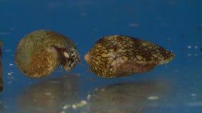 Escudos do cone no aquário vídeos de arquivo