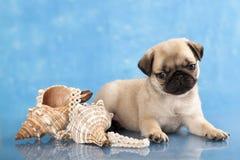 Escudos do filhote de cachorro e do mar do Pug foto de stock