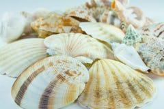 Escudos do mar. foto de stock