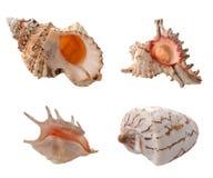 Escudos do mar imagens de stock royalty free