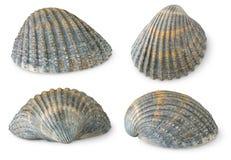 Escudos do mar fotografia de stock royalty free